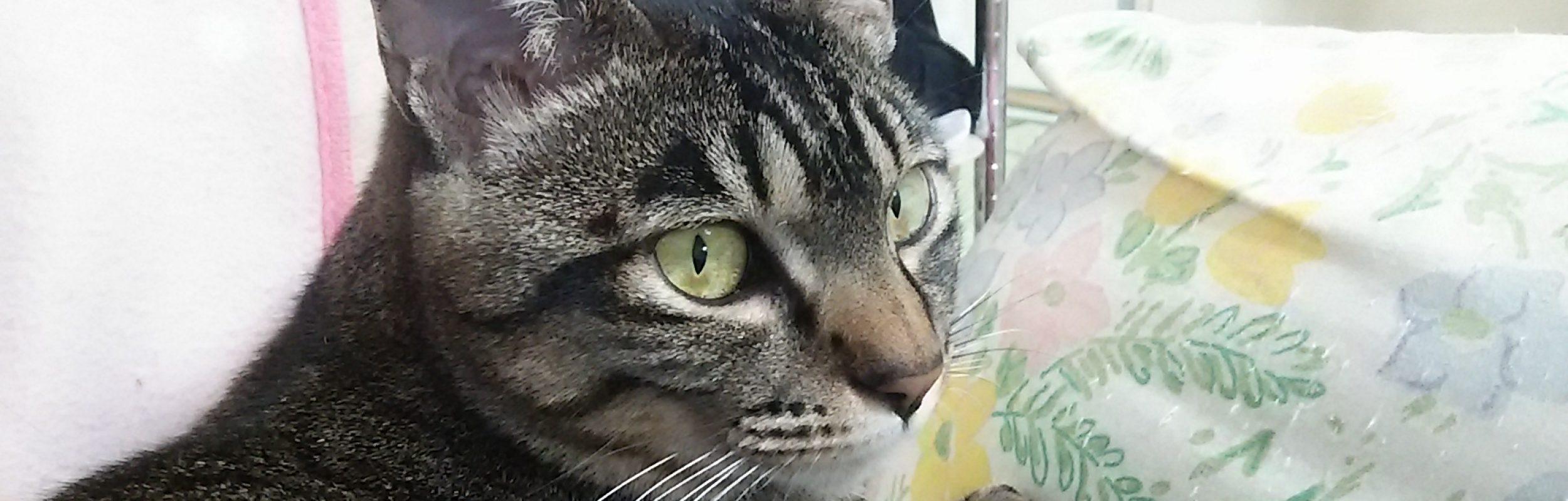 販売士猫野